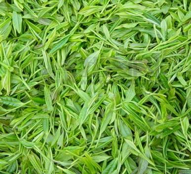 茶叶天然护肤品,用茶叶水洗脸的功效多