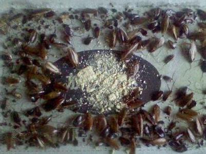 怎样灭蟑螂 家中常用三大招快速灭掉蟑螂