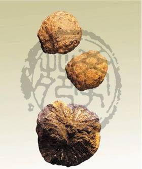中药药材蛇含石的功效与用法