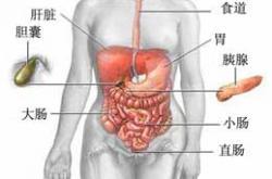 胆囊炎的症状有哪些  胆囊炎对身体有什么不适
