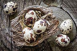 鹌鹑蛋的4大营养价值 居然