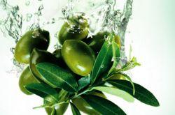 橄榄油的作用及功效 上好的橄榄油要怎么挑选