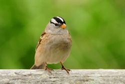如何防御禽流感 别慌把这些办法牢记在心