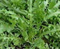 养生护肝的蔬菜有哪些?