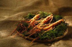 人参粉的功效与作用 食用人参粉的禁忌有哪些