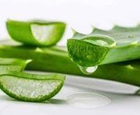 芦荟的治病功效及食疗方