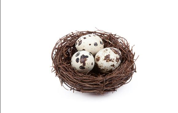 鸽子蛋你怎么吃的呢?