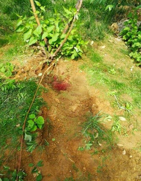 济南一中年男子从26楼不幸坠亡 砸出20厘米深坑