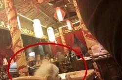 火锅店人和狗一桌同吃 宠物狗舔食餐盘无人管